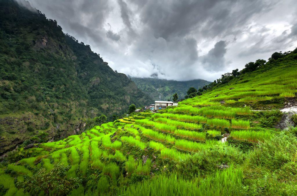 Pola ryzowe Pokhary
