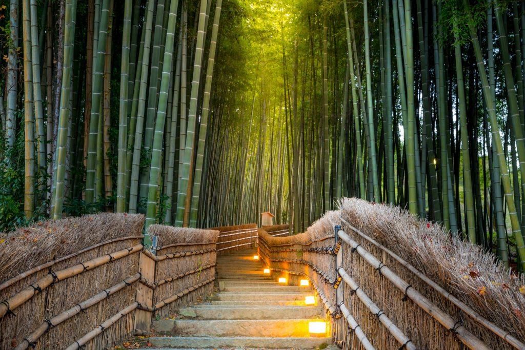 Arashiyama las bambusowy